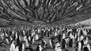 Il sale della Terra, Salgado, Wenders